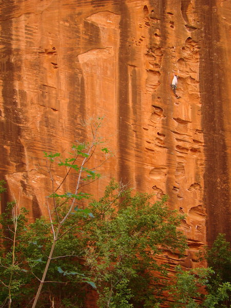 Rock Climbing Photo: beautiful color contrasting ecosystem