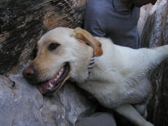 Rock Climbing Photo: Who says dogs can't chimney?  Sakari on a doggie 5...