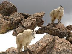 Rock Climbing Photo: Damn dirty animals.