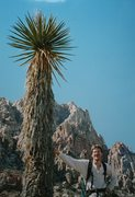 Rock Climbing Photo: The Two Biggest Yuccas in the Desert. (The one on ...