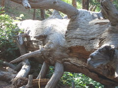 Rock Climbing Photo: wood