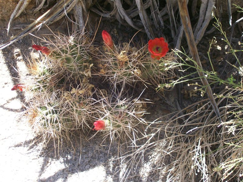 JT has other stuff besides rocks.  It also has spiky plants that stubbornly flower even though they are growing in bone-dry gravel.