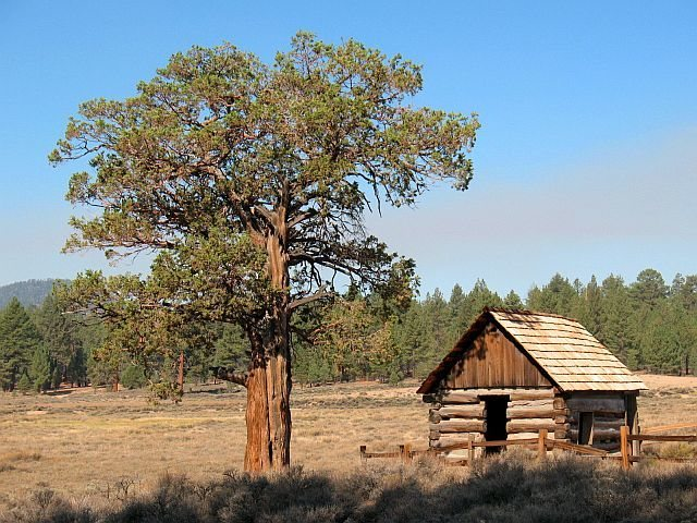 Rustic cabin in Holcomb Valley, Big Bear