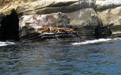 Rock Climbing Photo: ~Gone Fishin~  These crag seals swim around you wh...