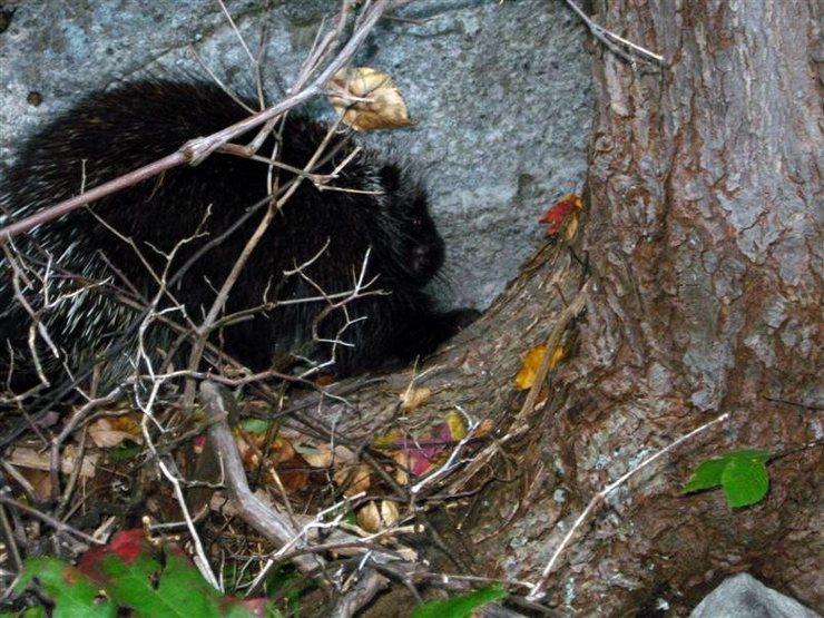 Rock Climbing Photo: Local Wildlife