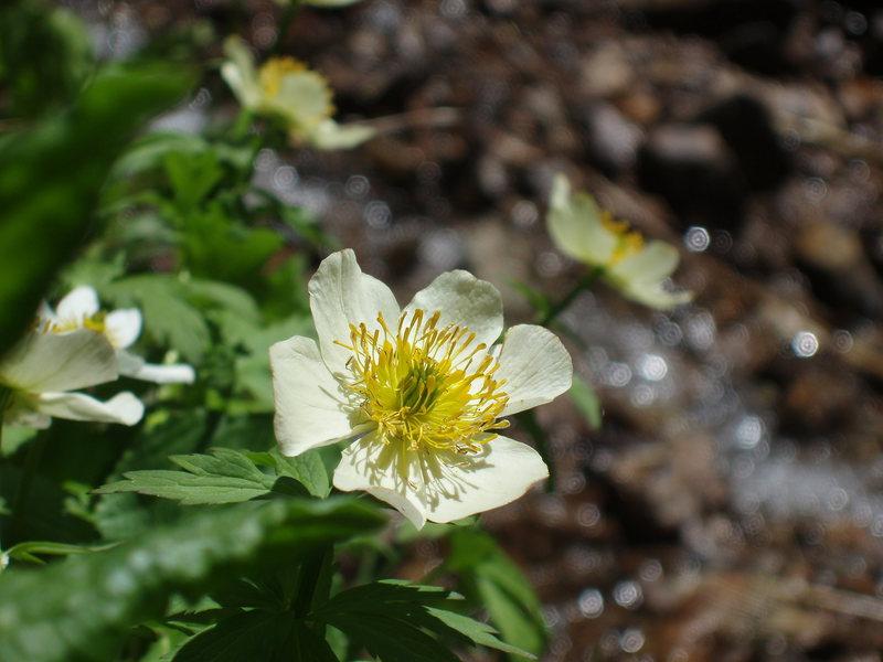 Rock Climbing Photo: flowers