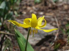 Rock Climbing Photo: flower...