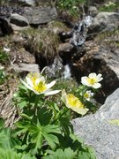 Rock Climbing Photo: wild flowers and snowmelt...