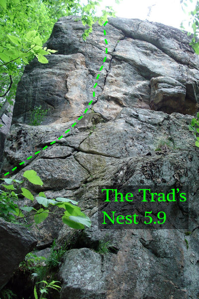 the crack of trad's nest