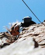 Rock Climbing Photo: um, climbing