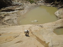 Rock Climbing Photo: The dogs hit the Three Fingers Swimming Pool .Free...