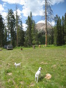 Rock Climbing Photo: Same day July Ist moved campsite to the La Sal mou...