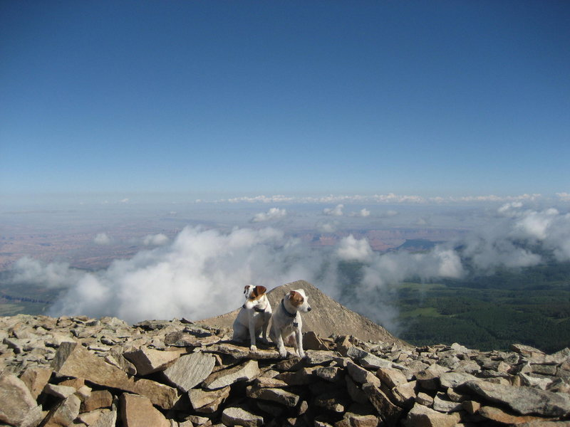 Terriers on the summit . In the background Castle Valley