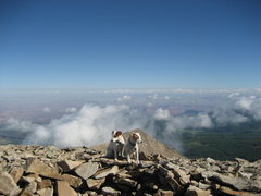 Rock Climbing Photo: Terriers on the summit . In the background Castle ...