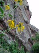 Rock Climbing Photo: @ the anchor....