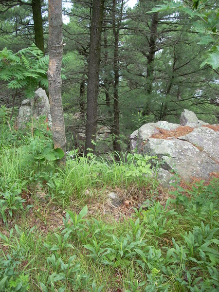 A view of the access gully from standing on the paved trail at the top of the cliff.