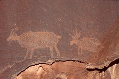 Rock Climbing Photo: A petroglyph of a moose near Dark Angel.