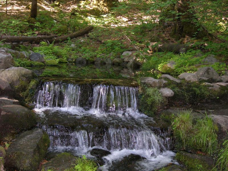 Fern Springs<br>