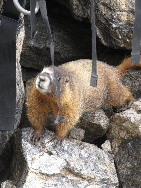 Rock Climbing Photo: I'm hungry!