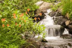 Rock Climbing Photo: Wildflowers (North West Columbine) along the banks...