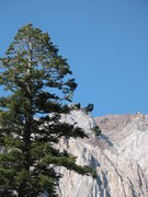 Rock Climbing Photo: Bald Eagle on the shore of Convict Lake.