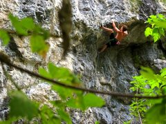 Rock Climbing Photo: Mark pulling roof on License to Thrill 5.11c