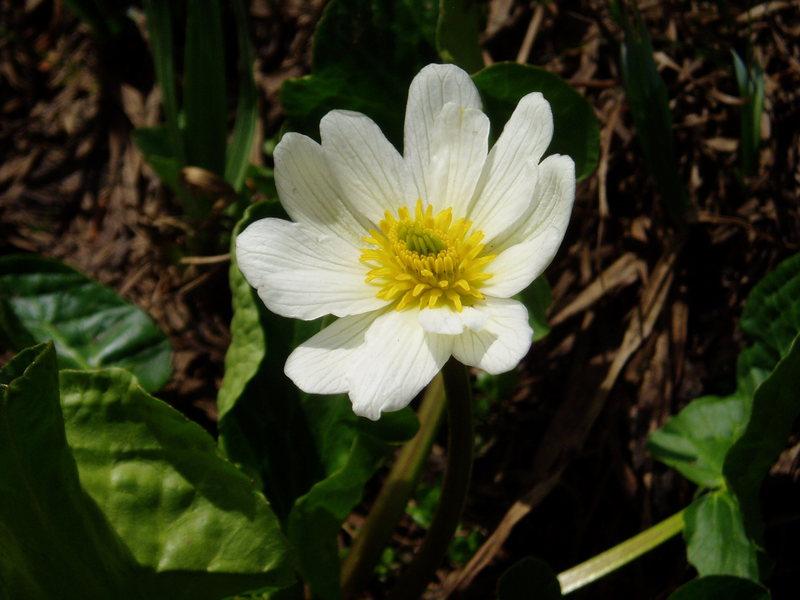 Rock Climbing Photo: flower power