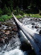 Rock Climbing Photo: Log