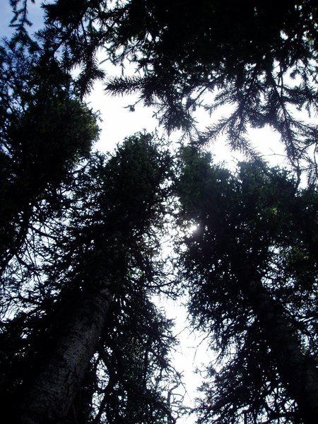 Rock Climbing Photo: trees