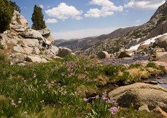 Rock Climbing Photo: Abundant Sierra Shooting Stars in the Treasure Lak...