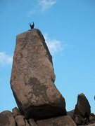 Rock Climbing Photo: Celebrating after an ascent of Headstone Rock, Jos...