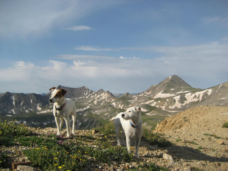 Rock Climbing Photo: Another dog walk up Mt Oxford and Mt Belford