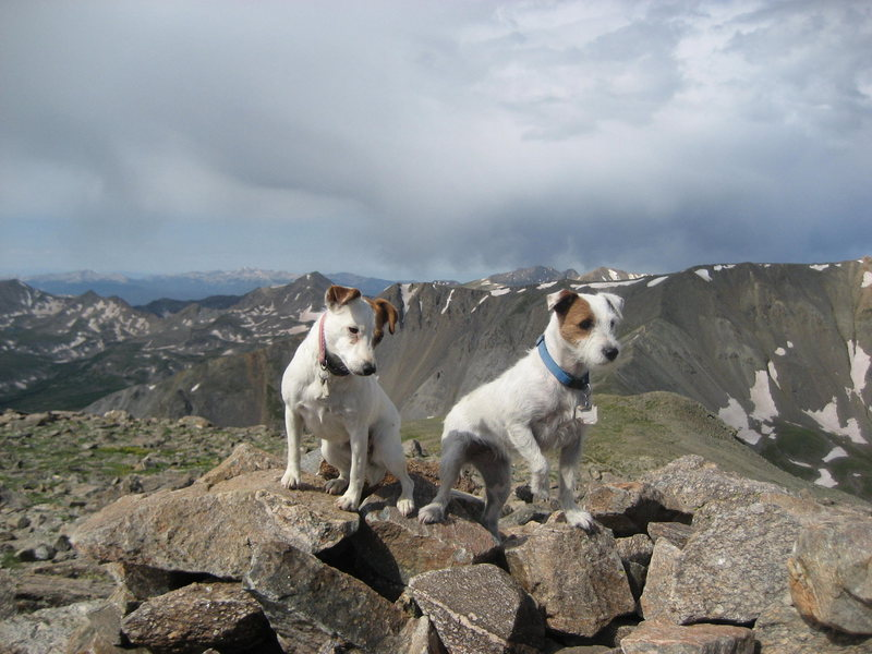 Rock Climbing Photo: Summit of Mt Oxford 14153'