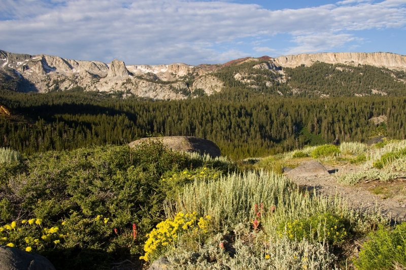 Wildflowers on Panorama Dome with the Mammoth Crest in the background.