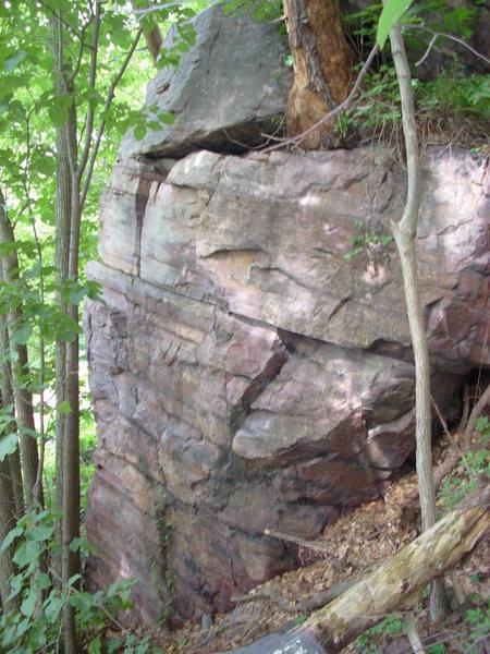 Climb to the pine tree.