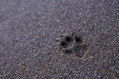 Rock Climbing Photo: Footprint from an endemic (and threatened) Island ...