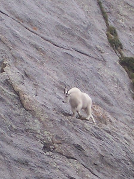 Rock Climbing Photo: Trail blazer at Mt. Evans.