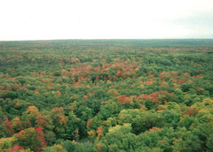 Rock Climbing Photo: Fall colors just starting. From atop Cliff Dr.