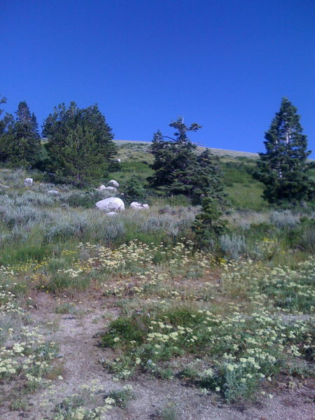 View from the T at Cherry Canyon Trail and Draper Connector Trail.  Head for the grassy hillside!