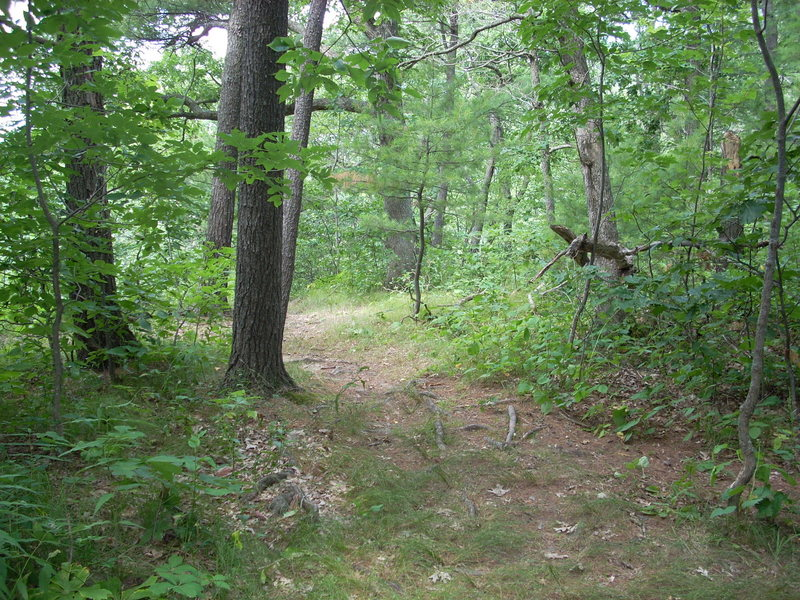 Rock Climbing Photo: This trail goes out to February Wall.