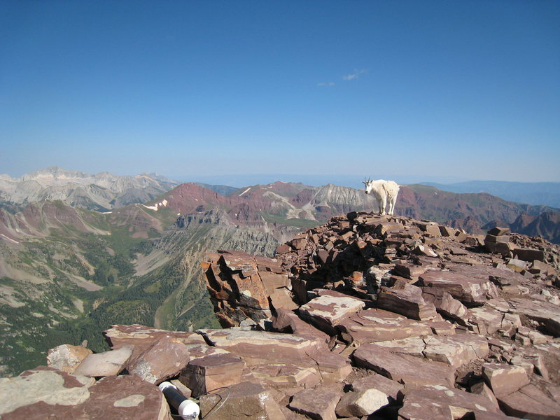 Mountain goat on the summit of Pyramid Peak, with Capitol Peak in the background.
