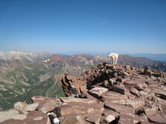 Rock Climbing Photo: Mountain goat on the summit of Pyramid Peak, with ...