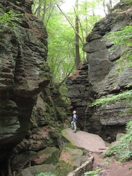 Parfrey's Glen Natural Area, WI -- No climbing allowed.