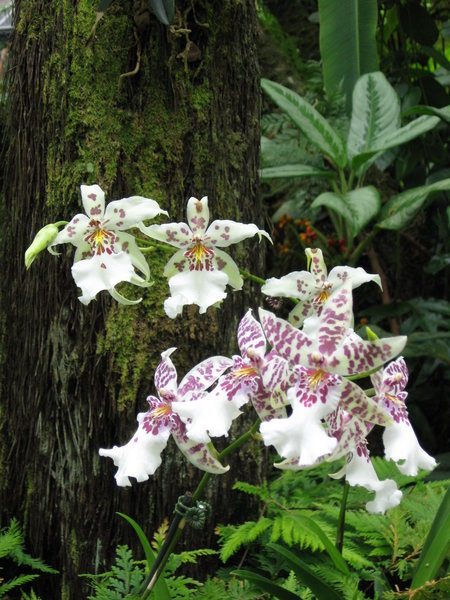 Rock Climbing Photo: Just some pretty orchids