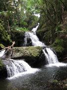 Rock Climbing Photo: Stream in the rain forest.