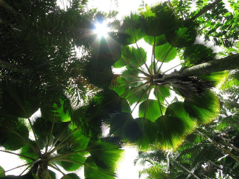Rain forest diversity.
