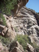Rock Climbing Photo: Slabby, well-featured wall at the Springer Gulch c...