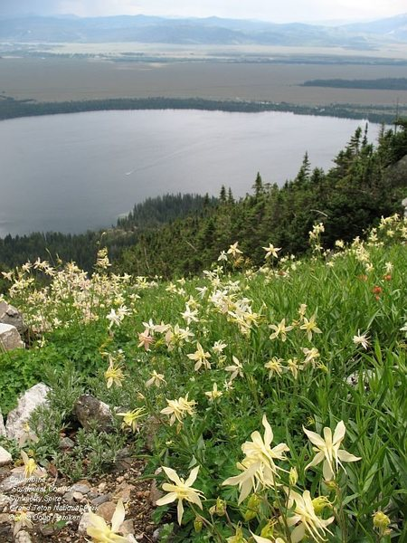 The Southwest Couloir is home to a large population of columbine.