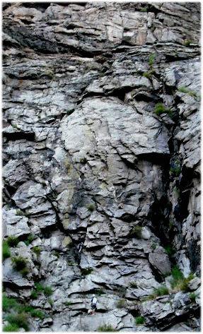 Rock Climbing Photo: CLMemorialRoute1