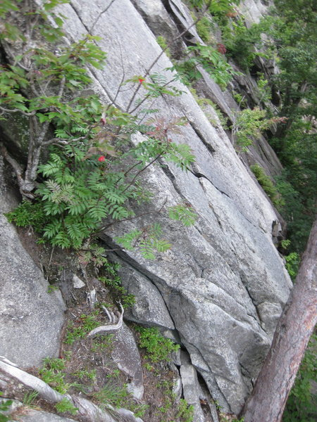 The first pitch Pine tree and the crack to the east of it.